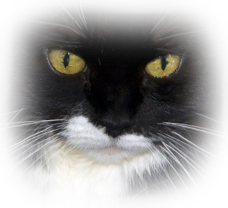 Index Of Users Tbalze Cat Png