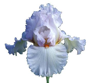 Index Of Users Tbalze Flower Iris