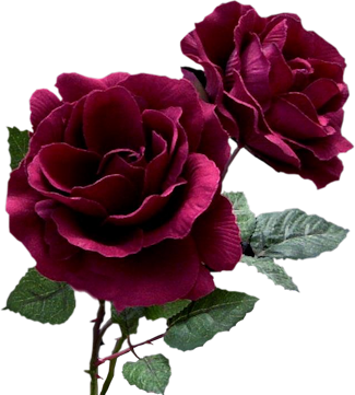 Index Of Users Tbalze Flower Roses Png